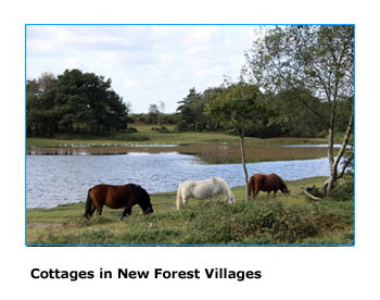holiday cottages to rent in the New Forest