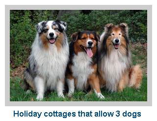 Holiday cottages that allow 3 dogs